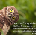Harvesting the Wisdom in Your Life